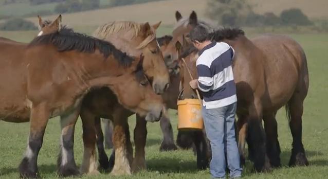 Eleveur de chevaux professionnel et passionné