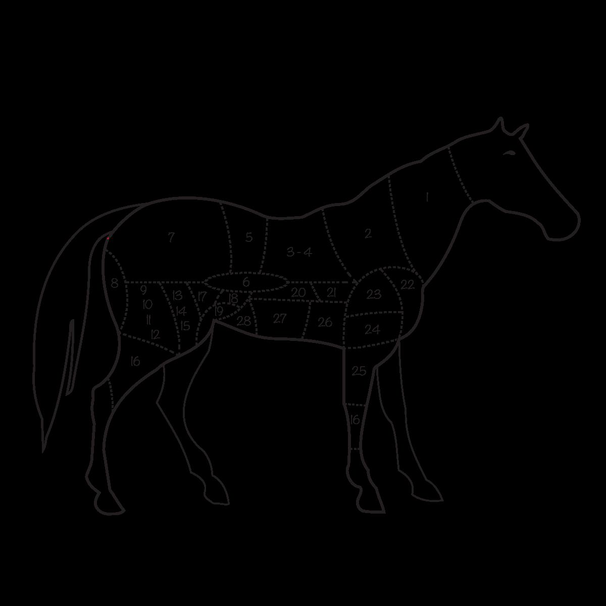 pieces-viande-de-cheval-schema-decoupe-boucherie-chevaline