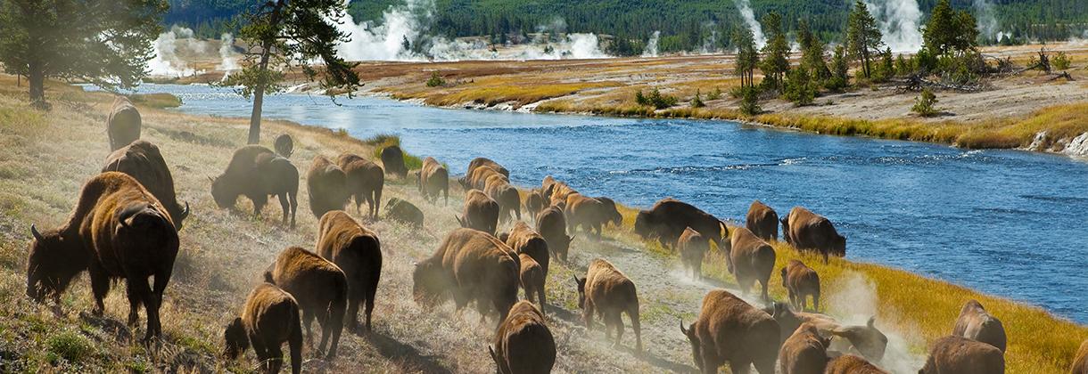 slider-bison-2
